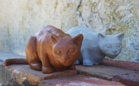 Katt-rost-grå
